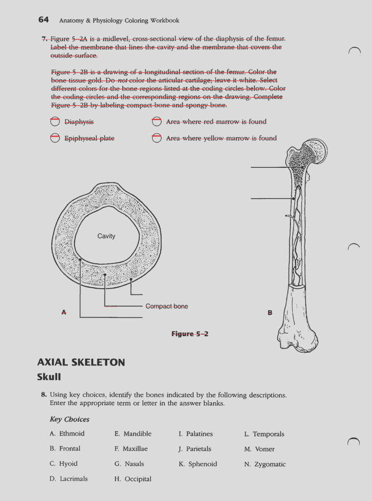 anatomy and physiology coloring workbook chapter 10