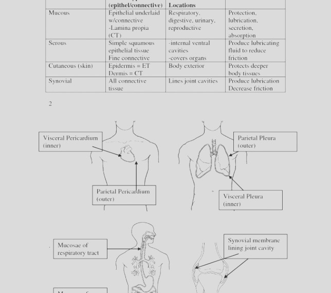 30 anatomy and physiology coloring workbook answers chapter 7 df6i
