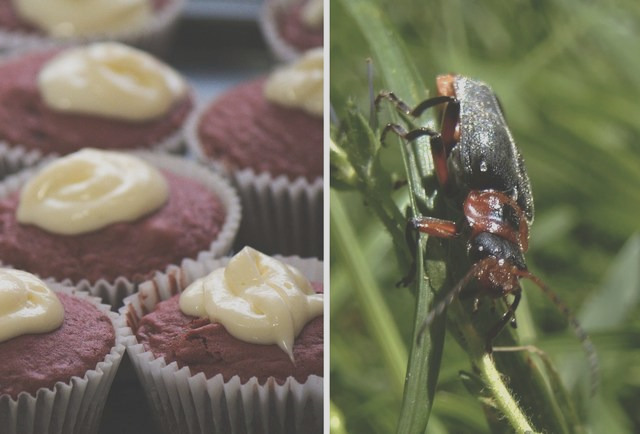 weird food additives bugs butt and more thrillist nation