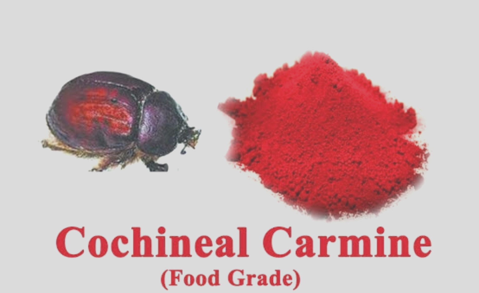 red food coloring bugs