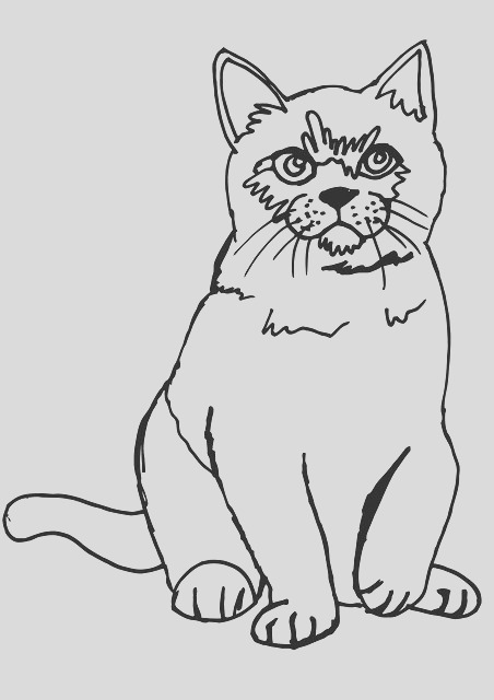 cat fluffy coloring page coloring