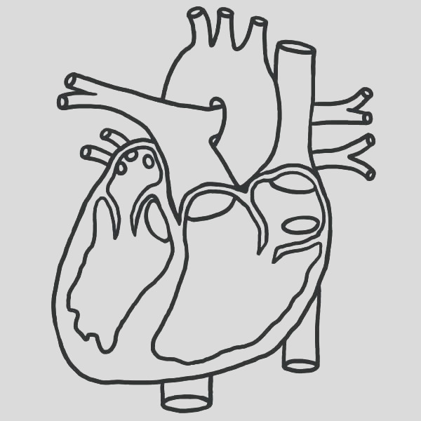 cardiovascular system coloring pages