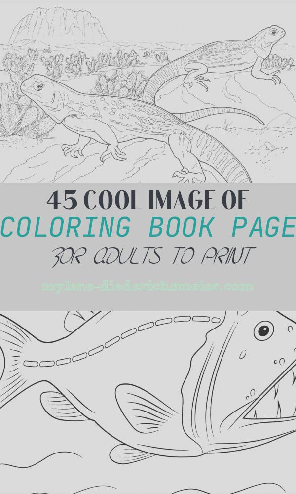 Coloring Book Page for Adults to Print Beautiful Desert Animal Camel Coloring Page for Adult Coloringbay