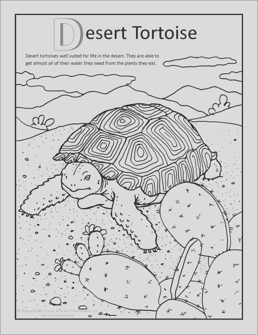 desert animal camel coloring page for adult