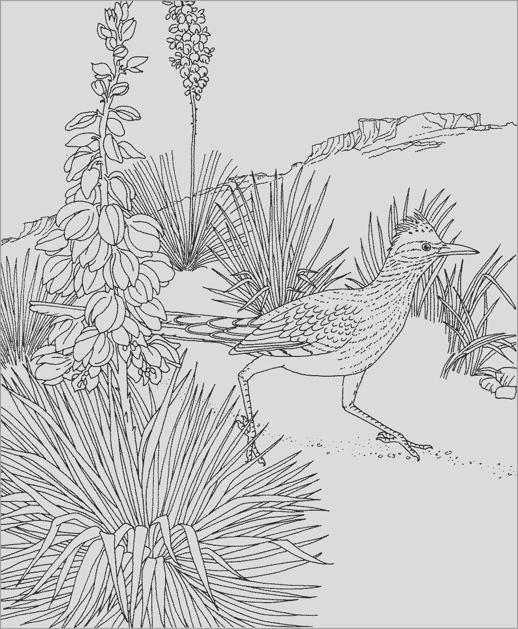roadrunner coloring pages printable