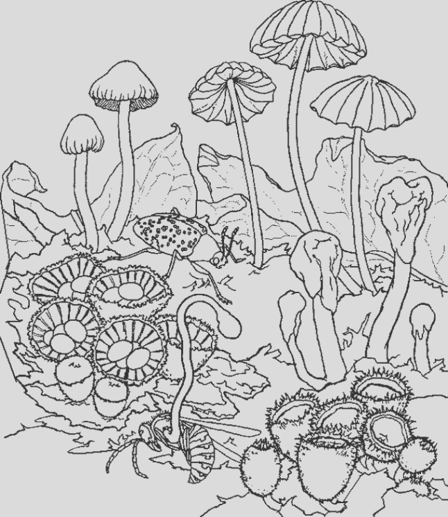 trippy printable coloring pages