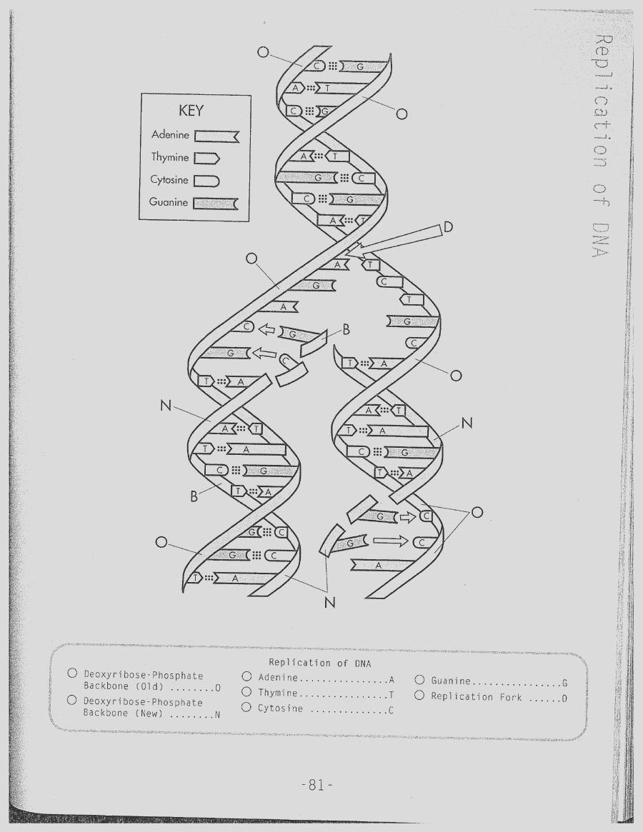 dna drawing