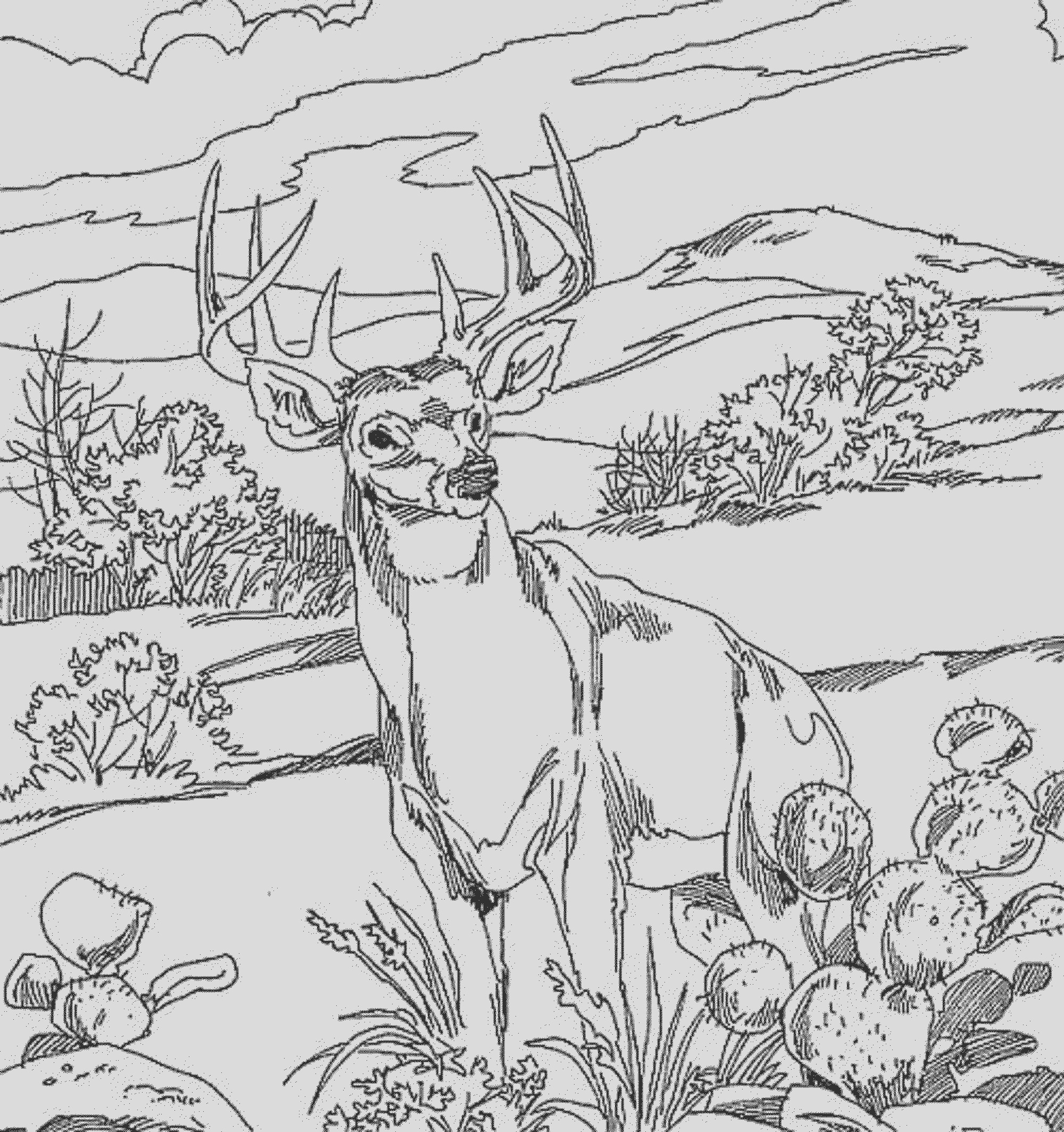 coloring pages for kids deer