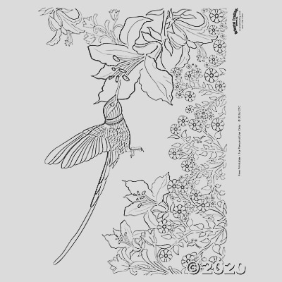hummingbird adult coloring page free printable a2 fltr
