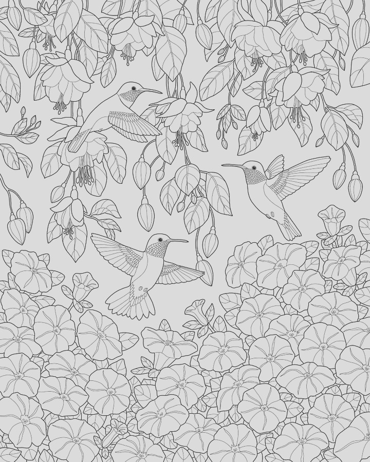 hummingbirds and flowers coloring page crista forest
