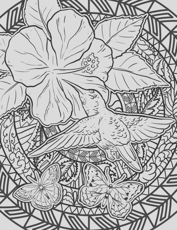 hummingbird coloring page adult coloring