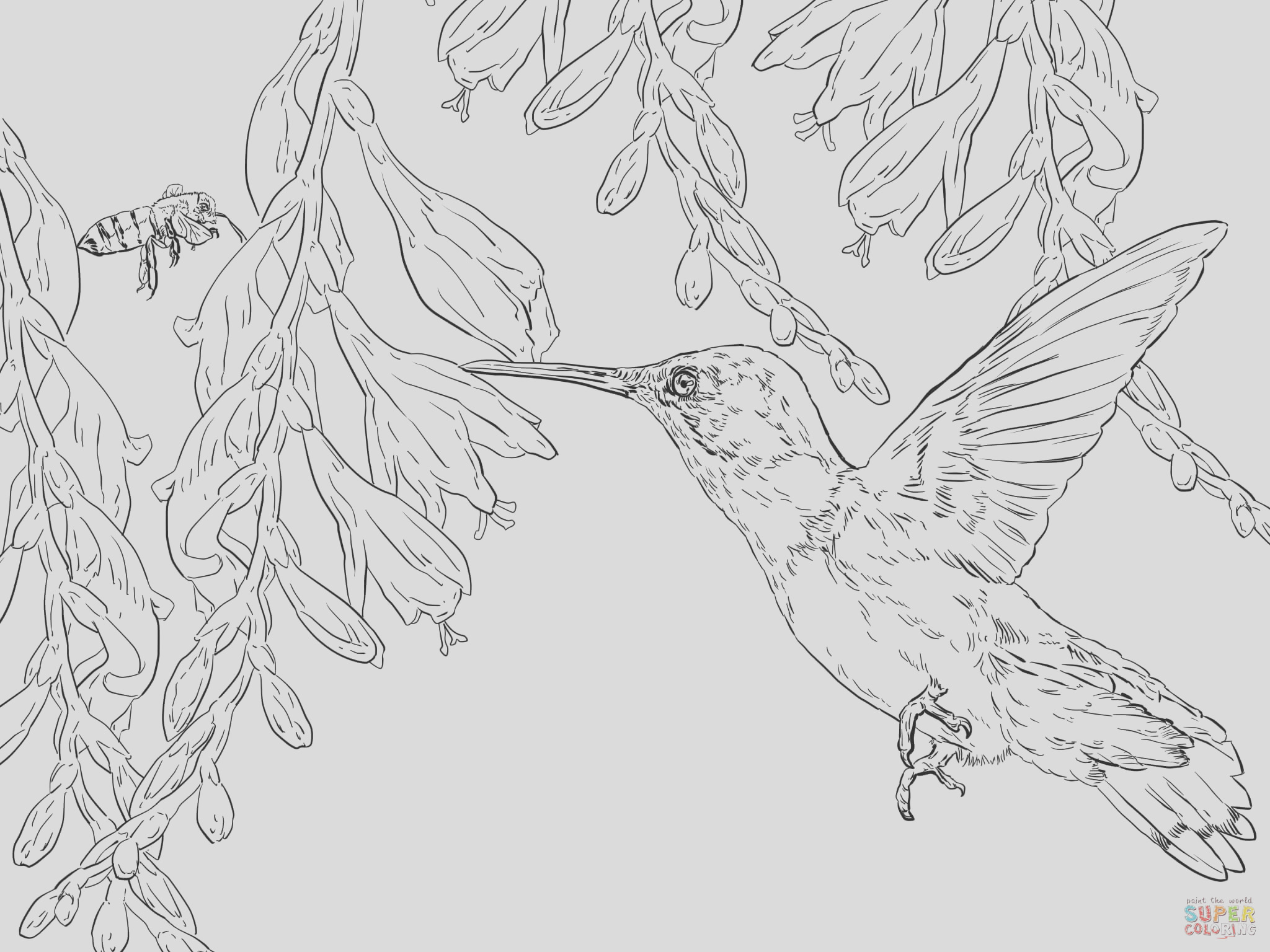 hummingbird coloring pages printable