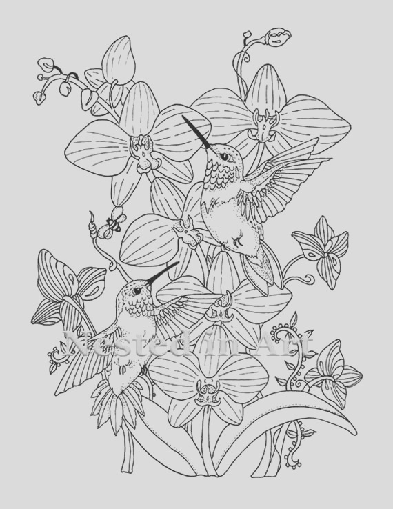 adult coloring page hummingbirds and