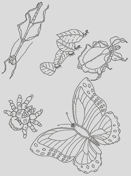 coloring pictures of insects