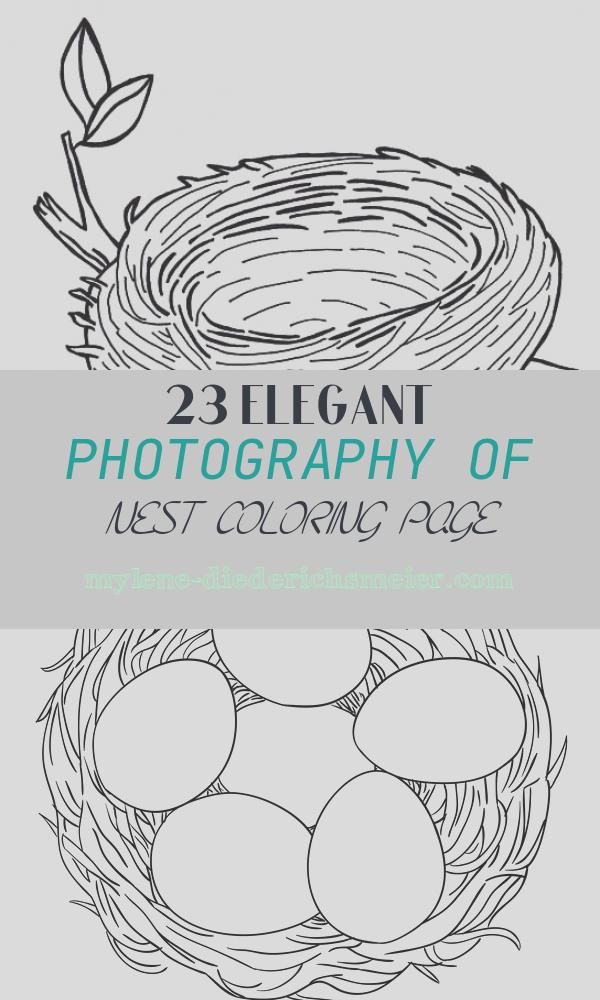Nest Coloring Page Beautiful Nest Drawing at Getdrawings