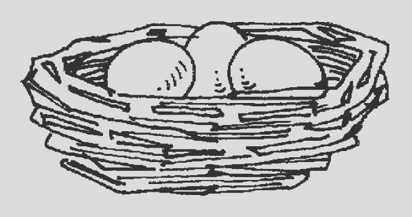 bird eggs in bird nest coloring pages