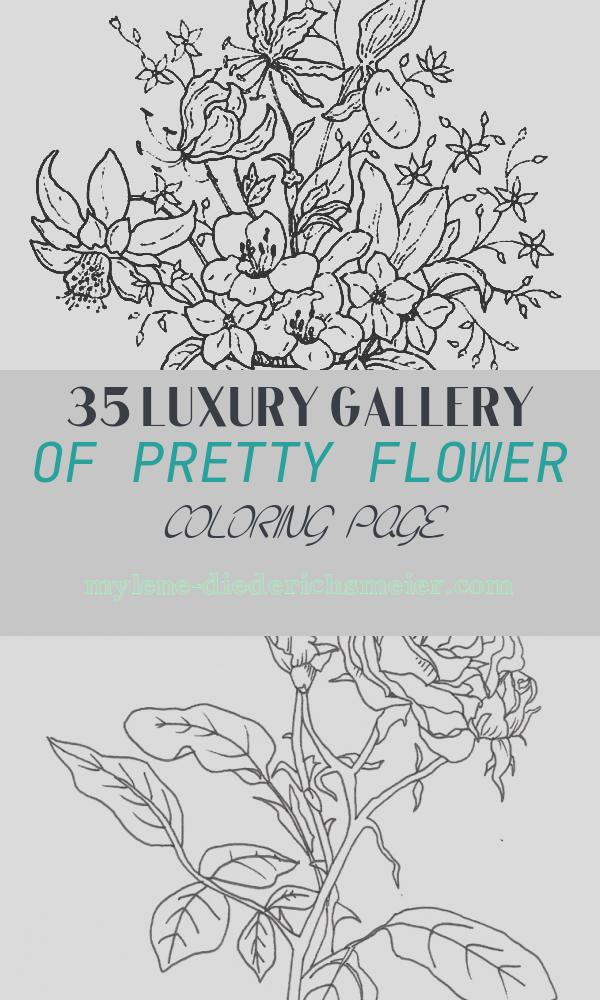 Pretty Flower Coloring Page Elegant Pretty Classical Basket Of Flowers Coloring Pages
