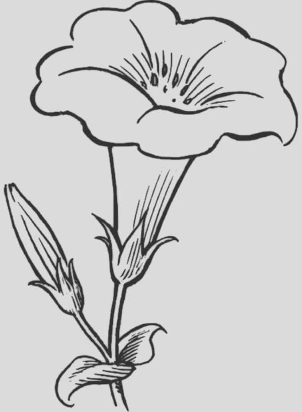 pretty flower for pretty flower bouquet coloring page