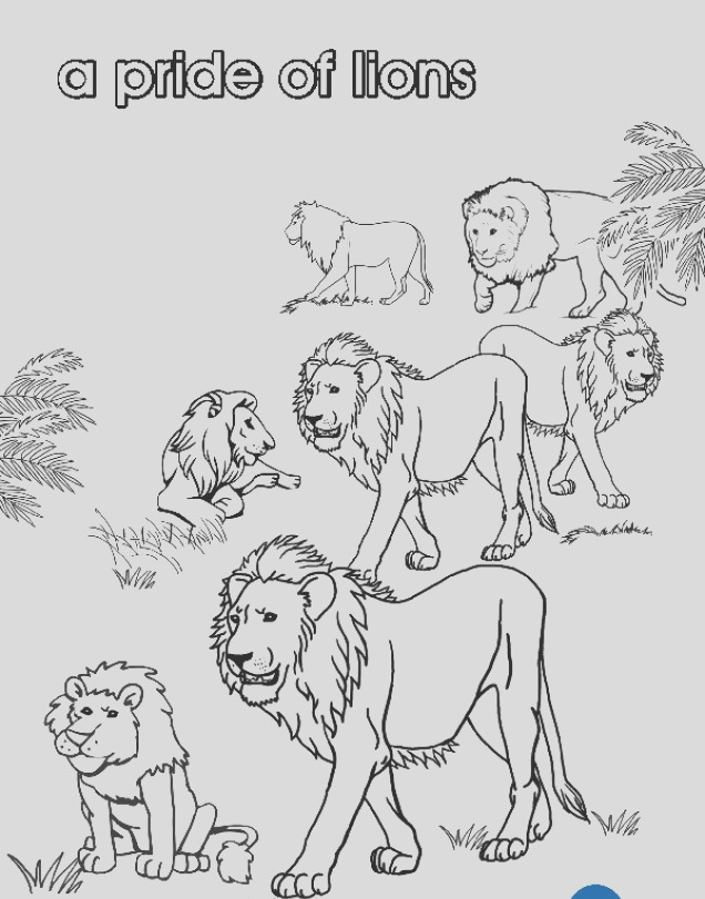 collective nouns a pride of lions