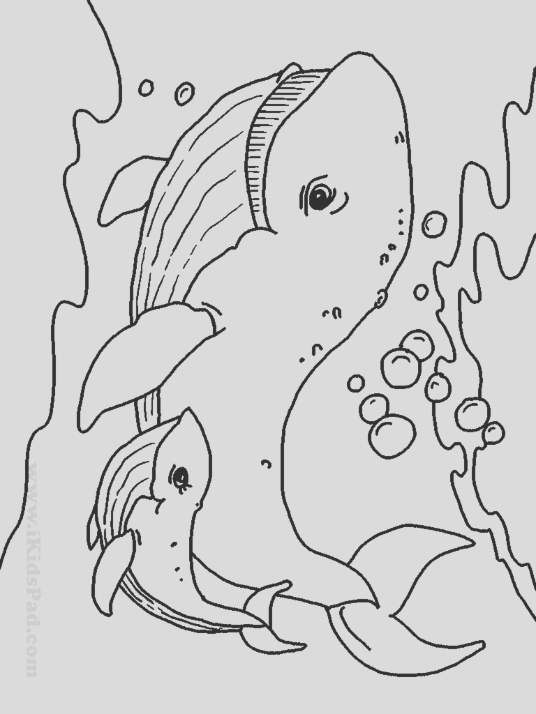 free printable coloring pages baby animals