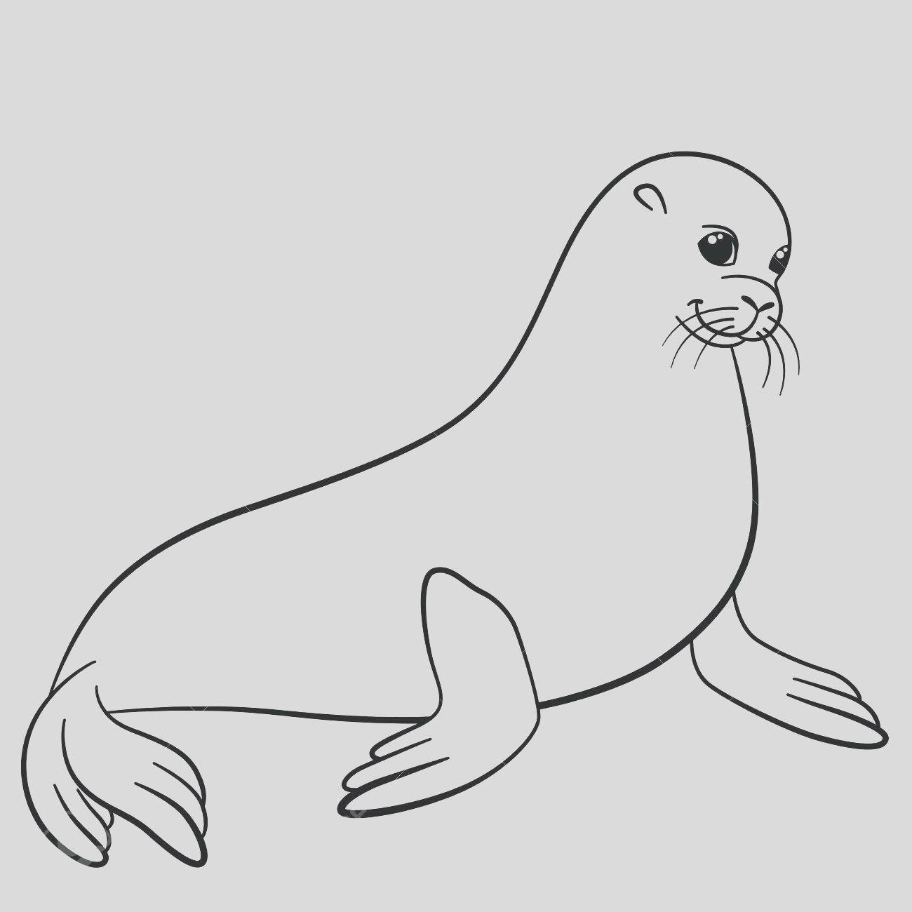 harp seal drawing