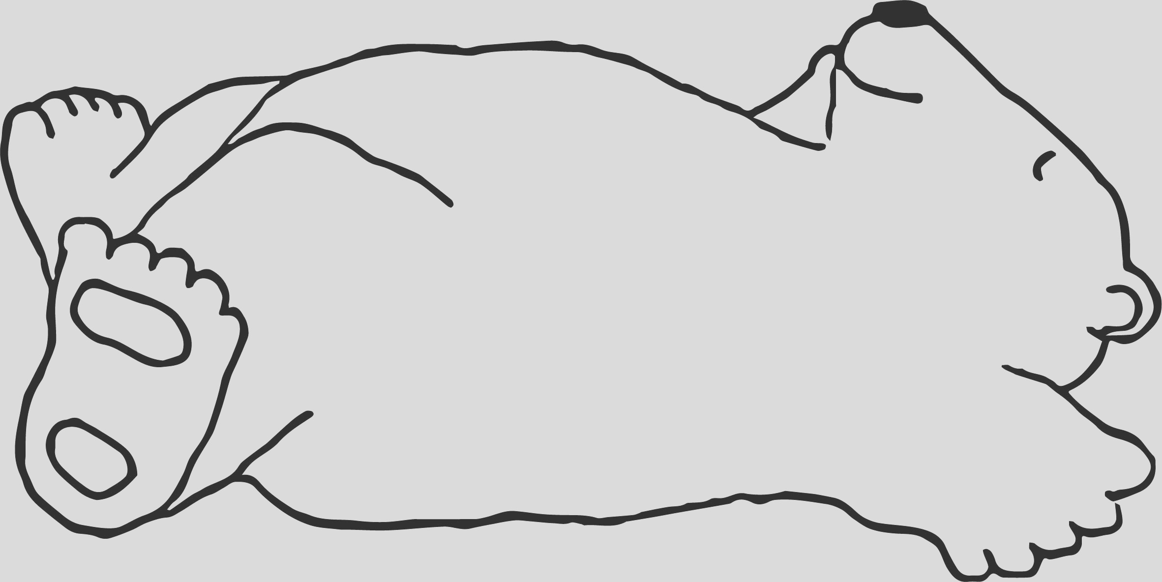 light bear sleeping coloring page