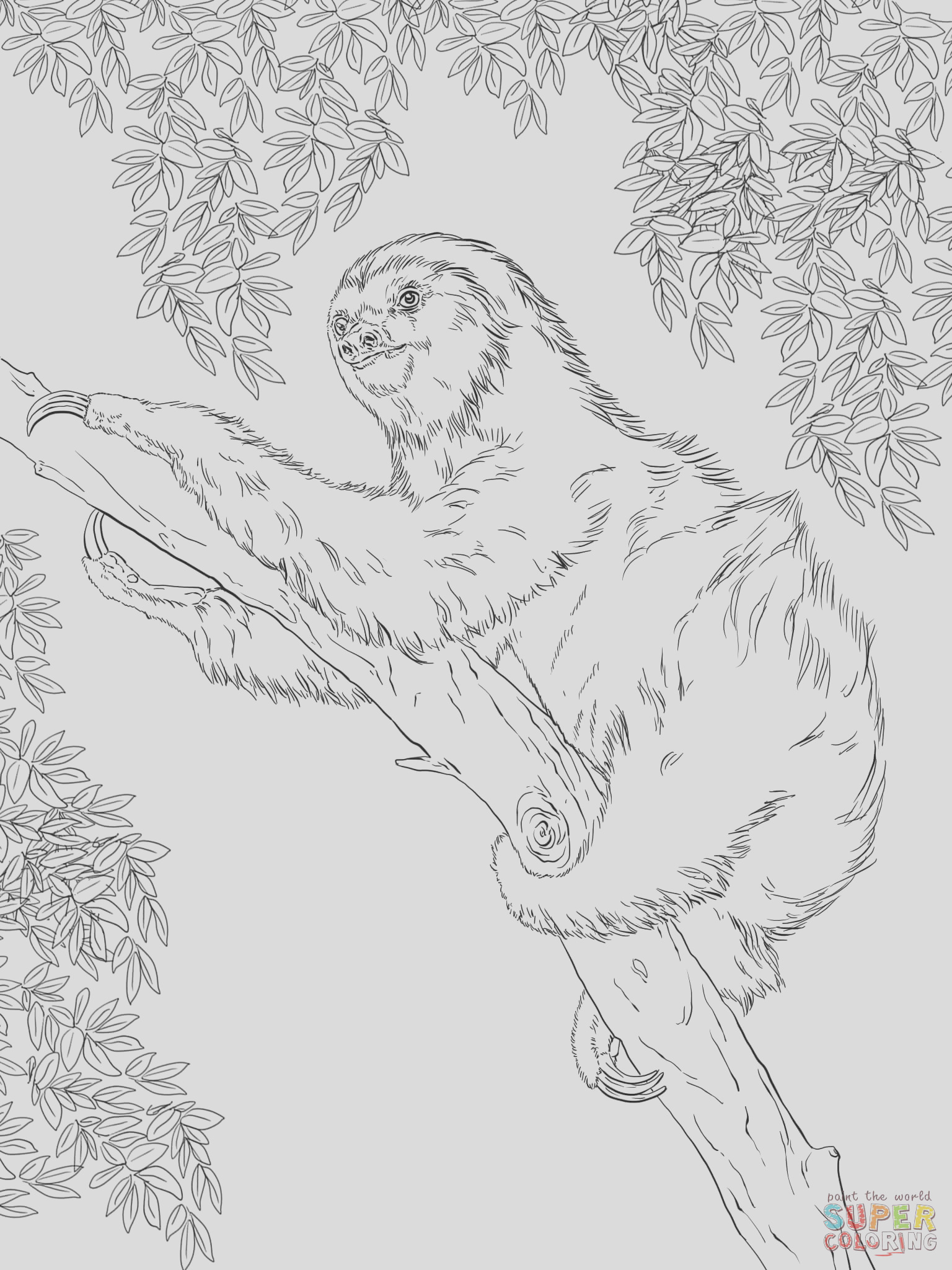 two toed sloth on tree