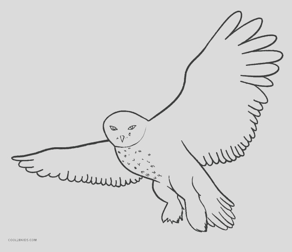 Snowy Owl coloring childrens