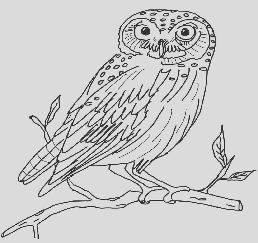 coloring pages of snowy white owl sketch templates