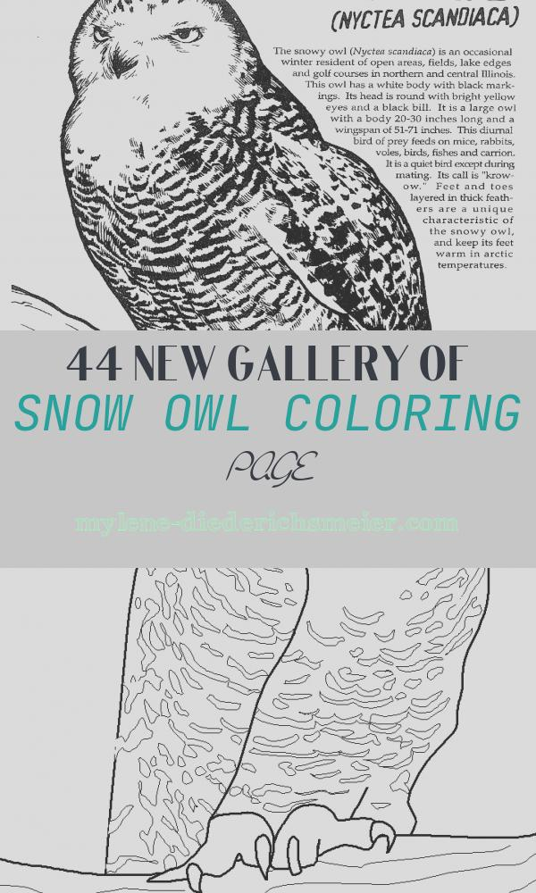 Snow Owl Coloring Page Luxury Snowy Owl Info and Coloring Page Part Of the Masters Of