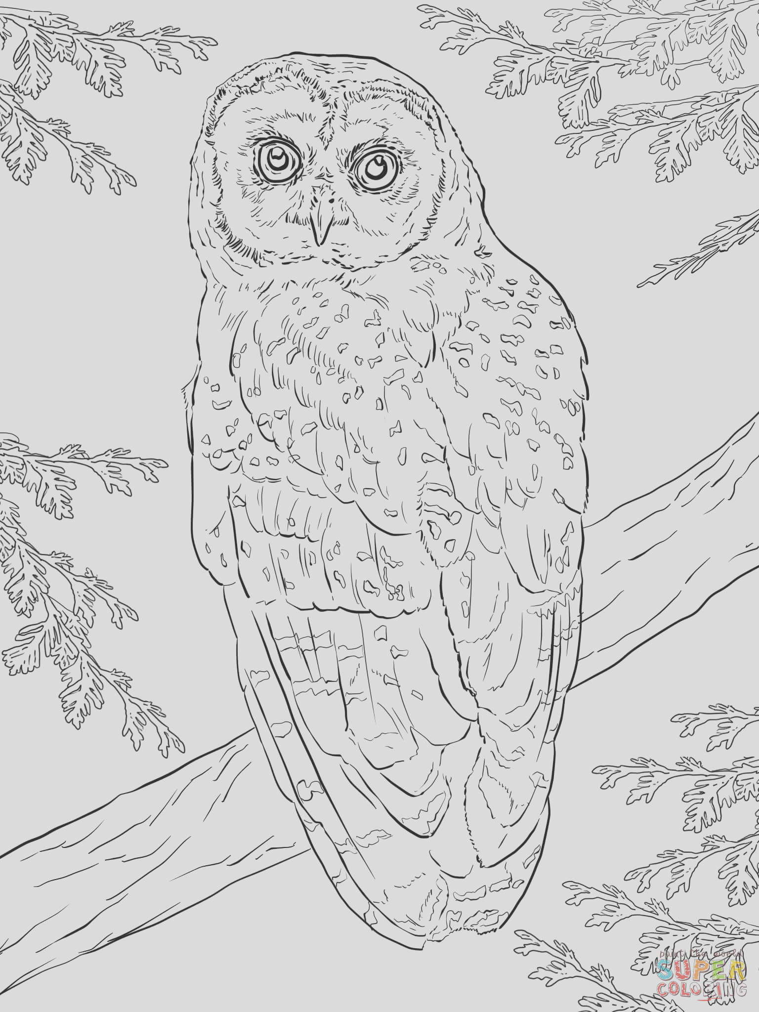Great Grey Owl coloring snow owl