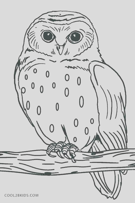 Great Horned Owl coloring free coloring