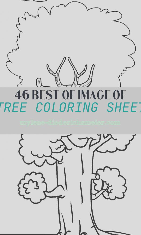 Tree Coloring Sheet Luxury Free Printable Tree Coloring Pages for Kids
