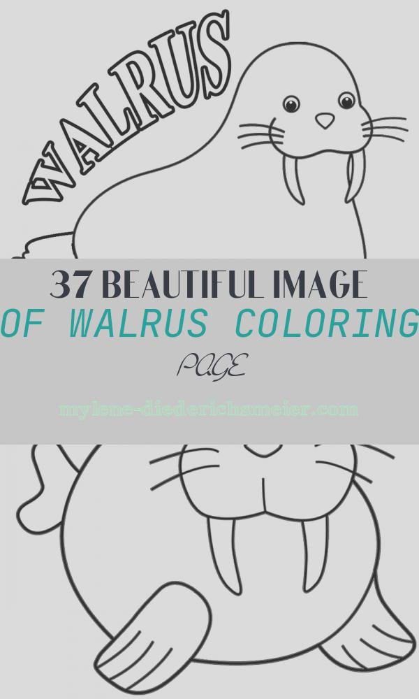 Walrus Coloring Page Beautiful Printable Walrus Coloring Pages for Kids