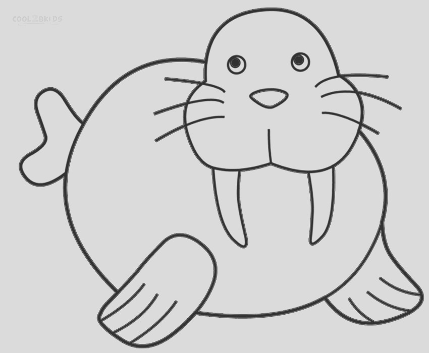walrus coloring pages