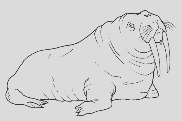 12 free animal walrus coloring sheet
