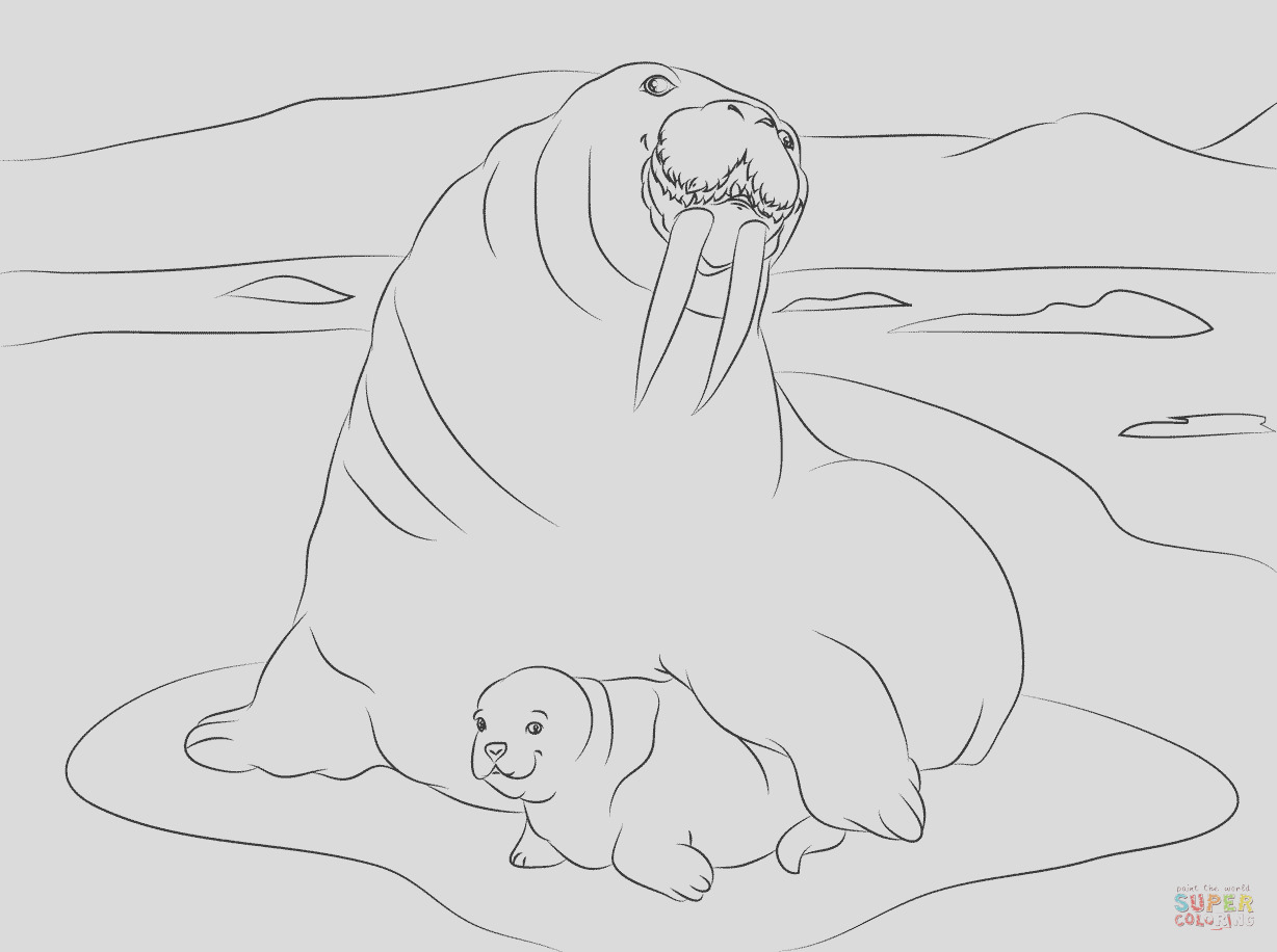 cute walrus drawing