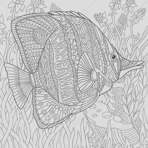 butterflyfish coloring