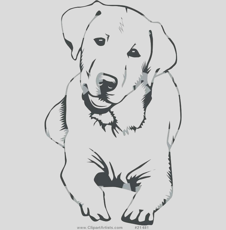 golden retriever line drawing
