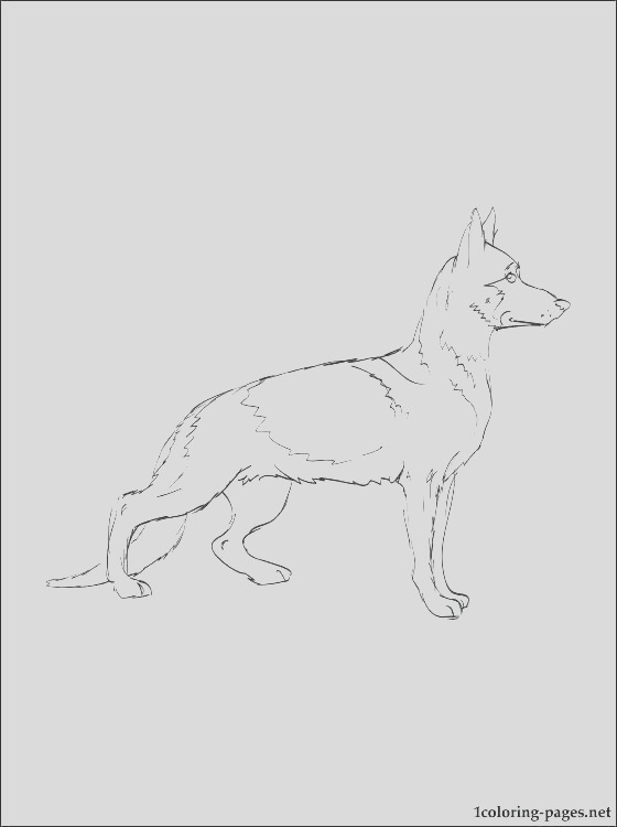 yellow lab coloring pages