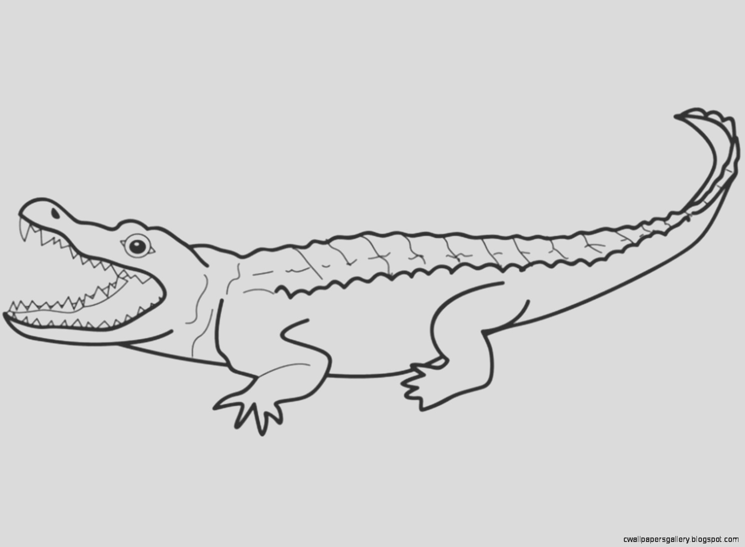 reptiles and amphibians coloring pages sketch templates