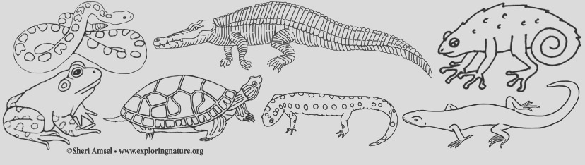 Amphibian and Reptile Coloring Pages