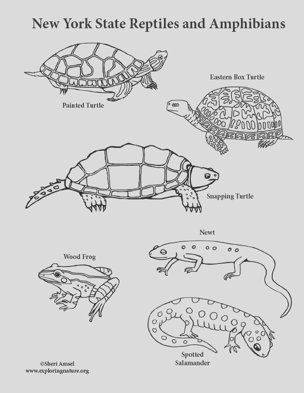 New York State Reptiles and Amphibians Coloring Page