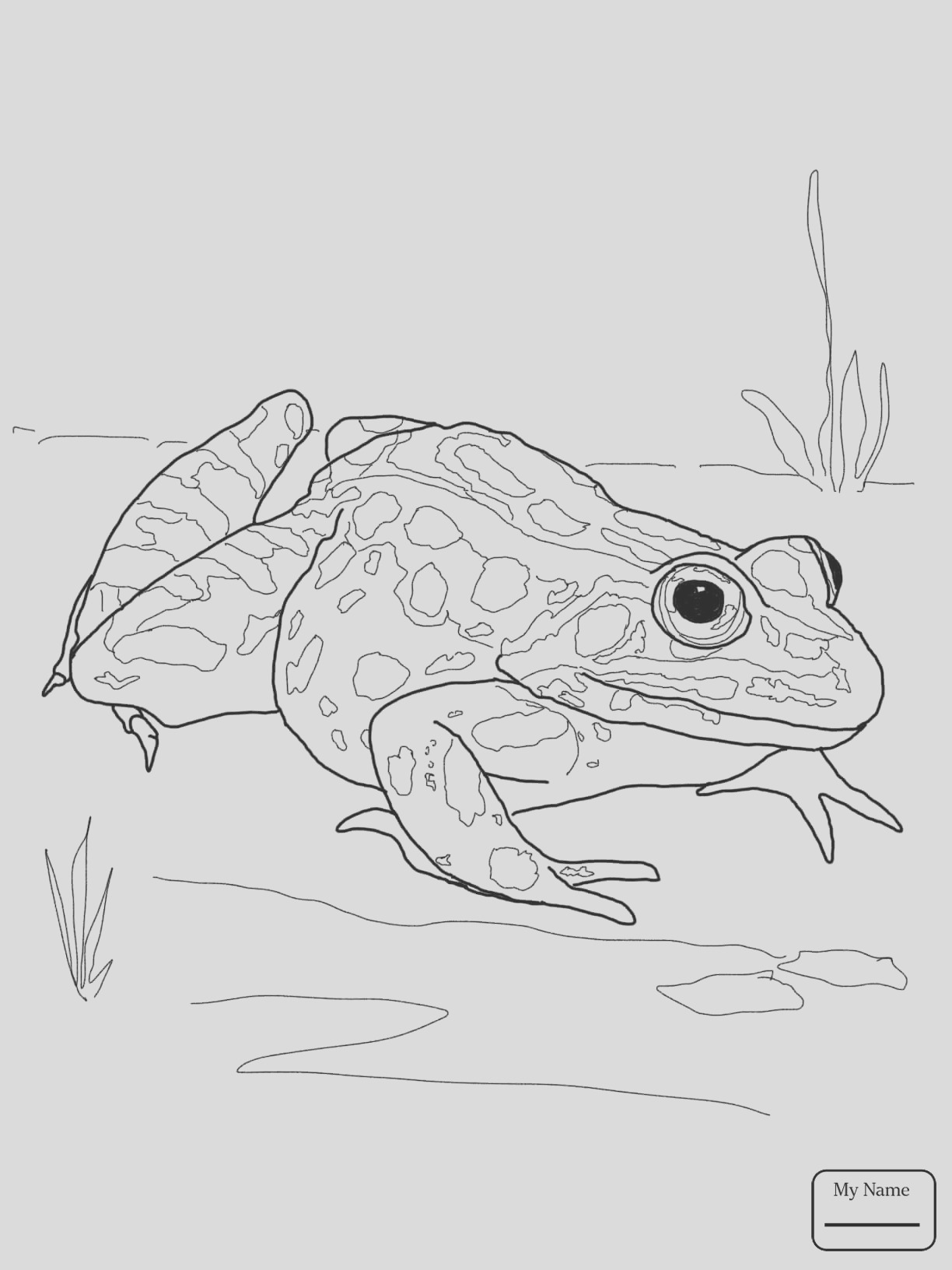 spotted salamander drawing