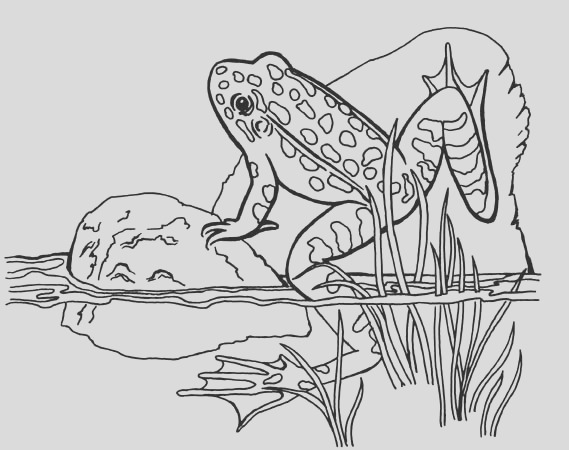 leopard frog coloring page