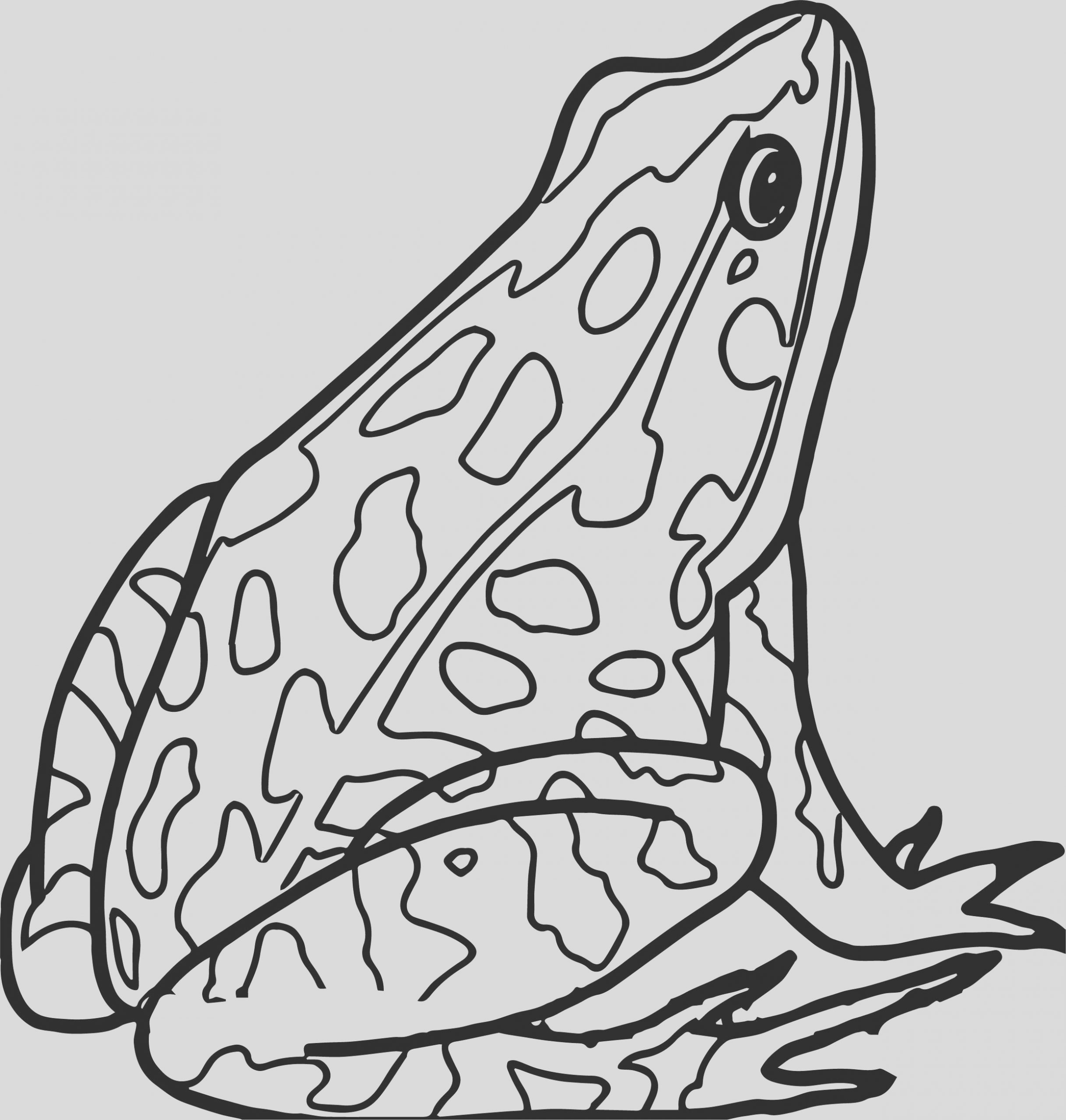 realistic frog amphibian coloring page