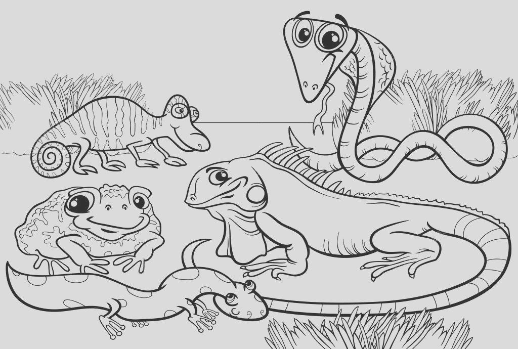 stock illustration reptiles and amphibians coloring page