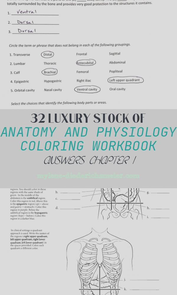 Anatomy and Physiology Coloring Workbook Answers Chapter 1 Awesome Anatomy and Physiology Coloring Workbook Answer Key Chapter 1