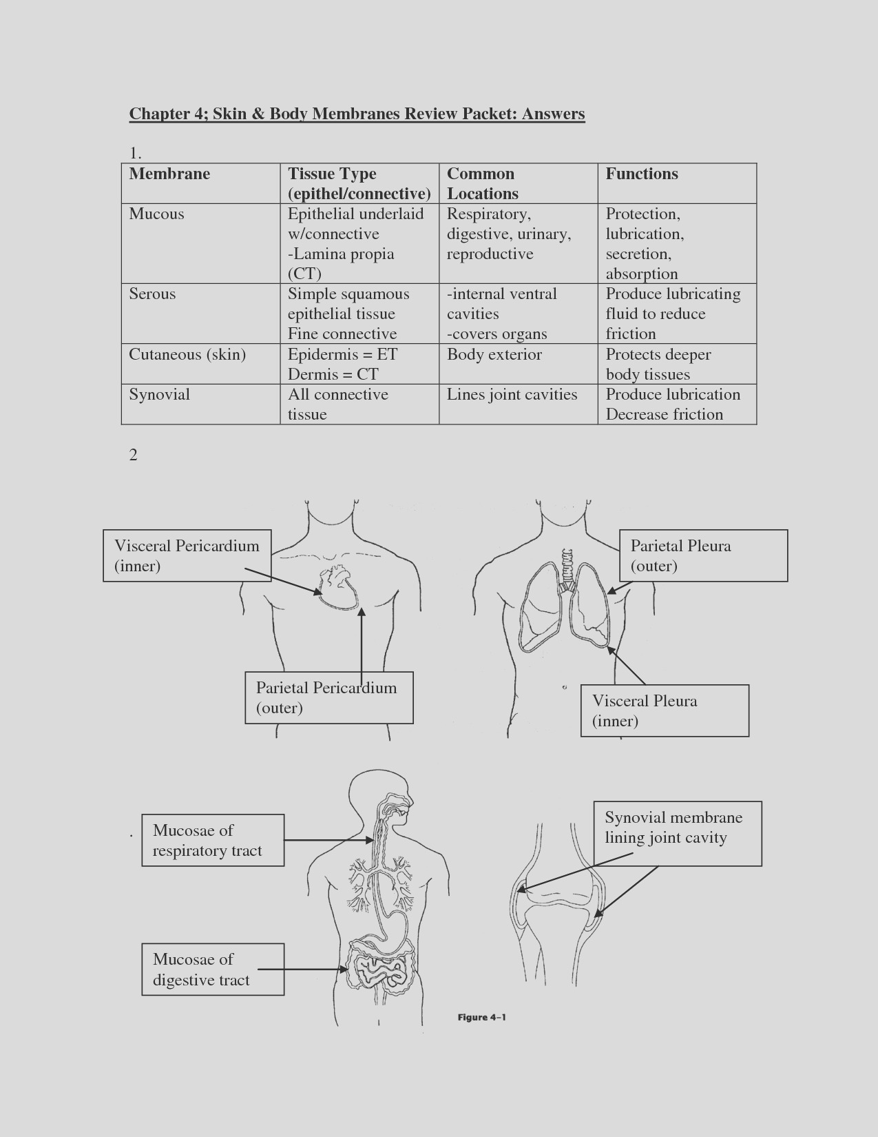 post anatomy and physiology worksheet packets