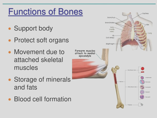 anatomy and physiology coloring workbook answer key chapter 5